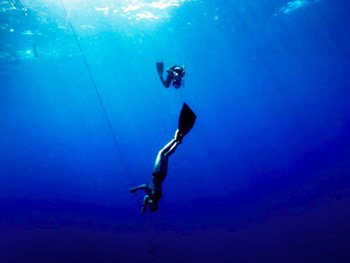 イルカと、海へ還る日